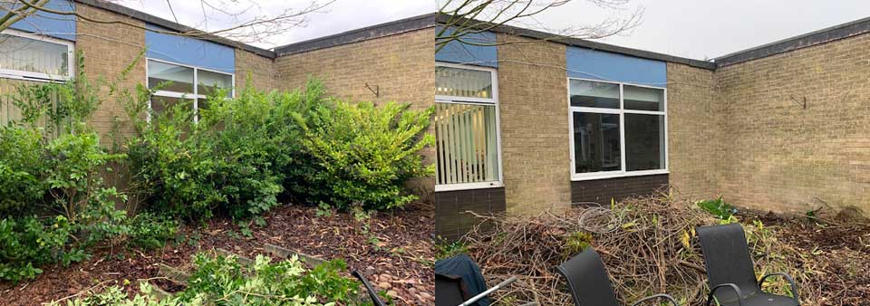 Pictured on the left are the shrubs before the work and on the right is after the shrubs were cut down to allow light into the classrooms.